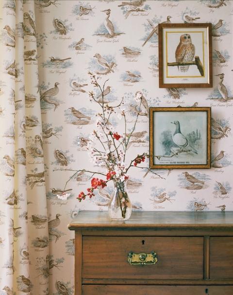 bewick-birds-low