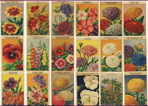 vintage seeds1