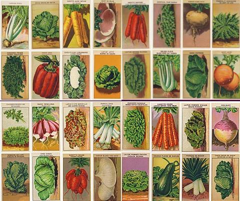 vintage seeds2